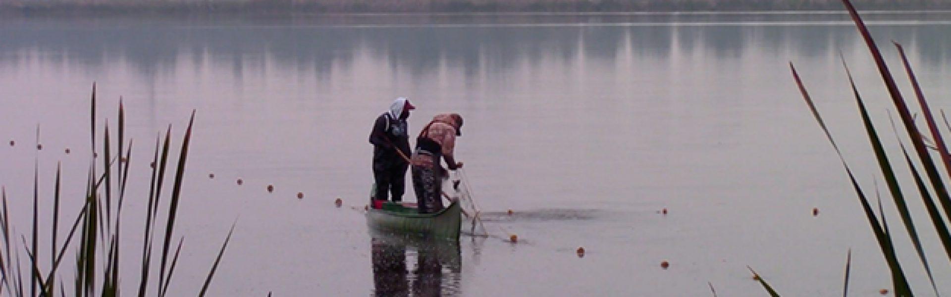 CAA Donde revolotea el agua San Gregorio Atlapulco y su memoria lacustre Still Catalogo
